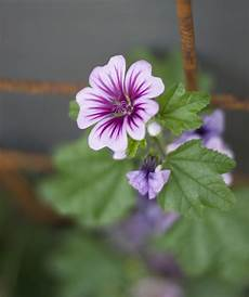 blumen klein small flower images clipground