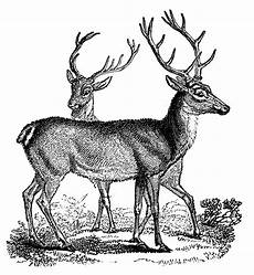 Clipart Of Deer 12 deer and antlers clipart the graphics