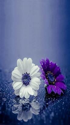 Beautiful Flower Wallpaper Zedge by 139 Best Zedge Wallpapers Images On