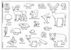 als pdf natur wald tiere pflanzen henkel