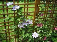 piante fiorite da terrazzo piante e fiori come si coltivano i ricanti su una terrazza