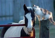 lettre chevaux 2016 abakan forest chatterie familiale choisir un pr 233 nom pour votre chaton sib 233 rien