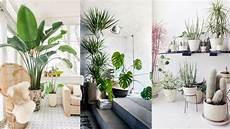 Home Decor Ideas Plants by 25 Best Indoor Plants Ideas Simple Ways To Decorate