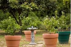 arbre fruitier en pot planter un arbre nain fruitier en pot