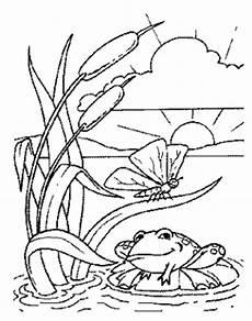 Ausmalbild Frosch Am Teich Frosch In Landschaft Ausmalbild Malvorlage Tiere