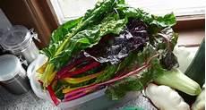 cucinare bietola bietola o bieta propriet 224 benefici e uso in cucina