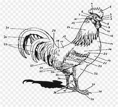 Anatomi Tubuh Burung Kesehatan Anda