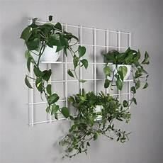 pflanzen machen sich aktuell an der wand oder decke