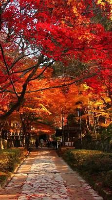 Fall Japan Iphone Wallpaper