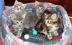 Chaton A Donner 27