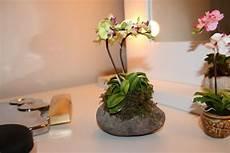 orchideen deko ideen deko mit orchideen 31 kreative ideen archzine net