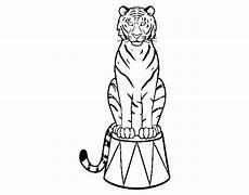 Ausmalbilder Zirkus Tiger Tiger Of Circus Coloring Page Coloringcrew