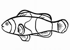 Mewarna Gambar Ikan Nemo