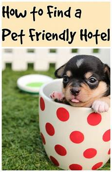 how to find a pet friendly hotel travel thrifty mommas tips