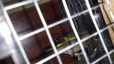 cardellino in gabbia gabbia per cardellino fatta in casa