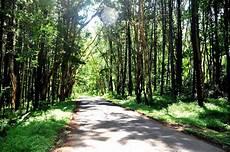 Ennay Journey Hutan Pinus Jogja