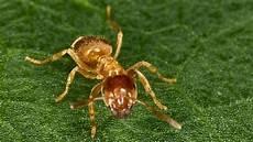 Einfacher Trick Sch 252 Tzt Den Rasen Vor Ameisen