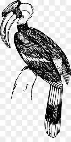 Gambar Burung Rangkong Kartun Gambar Burung