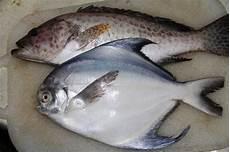 Harga Ikan Laut Konsumsi Per Kg 2018 Nama Nama Hewan