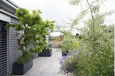 terrassengestaltung sichtschutz pflanzen terrassengestaltung raschle blumen pflanzen garten