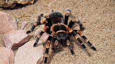 Gambar Alam Hewan Coklat Hitam Fauna Invertebrata