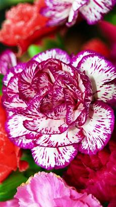 flower wallpaper hd new flower mobile wallpaper hd best hd wallpapers