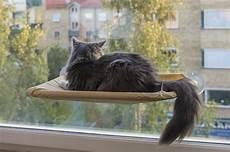 amaca per gatti le amache per gatti modelli e recensioni a mici di chicco