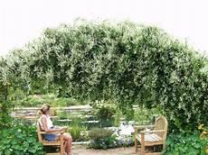 Arbre Pour Haie Qui Pousse Vite Flowers For Flower Silver Lace Vine
