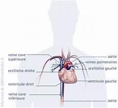 appareil cardio l appareil cardio circulatoire