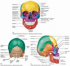 Sistem Muskuloskeletal Anatomi Sistem Muskuloskeletal