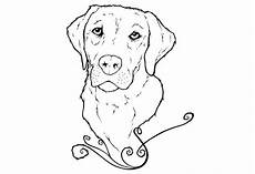 yellow lab puppy coloring pages labrador puppies