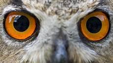 Ninjago Malvorlagen Augen Tier Ins Auge Geblickt Mensch Bis Gecko Radiowissen