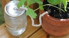 comment arroser ses plantes pendant les vacances 6 astuces pour arroser ses plantes pendant les vacances