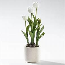 tulpen im topf in der kunst tulpen im topf deko