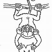 Monkey Hanging On A Tree Coloring Page