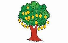 Berbagai Jenis Gambar Pohon Mangga Asli Dan Kartun