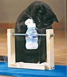 katzenspielzeug selber basteln image result for katzenspielzeug selber machen cats