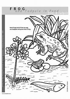15 frog coloring pages 2020 free printable coloring pages