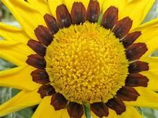 Gambar Alam Menanam Daun Bunga Warna Coklat Kuning