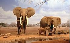 Elephant Hd Wallpaper For Mobile