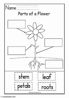 plant parts worksheet kindergarten free 13667 parts of the flower interactive and downloadable worksheet you can do the exercises or