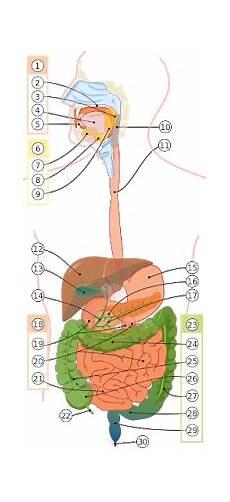 Penjelasan Lengkap Gambar Anatomi Struktur Tubuh