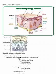 Anatomi Kulit Dan Keterangan Gambar