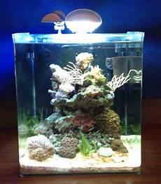 dennerle marinus meerwasser nano aquarium 30l cube riff