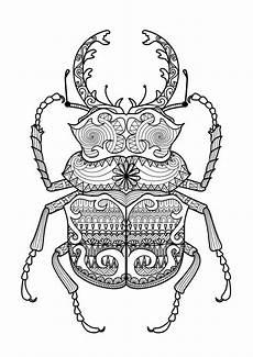 Insekten Malvorlagen Quest Insekten Malvorlagen Quest Aiquruguay