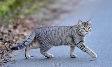 Welt Der Katzen Test 4 4
