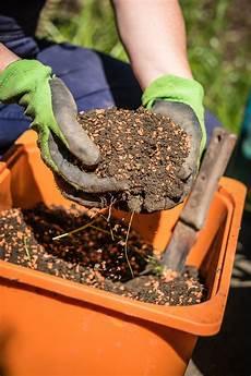 6 Bew 228 Sserungs Tipps F 252 R Balkon Und Topfpflanzen