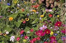 Der Bienenfreundliche Garten Mein Eigenheim