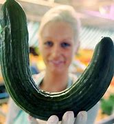 Image result for large bent cucumber
