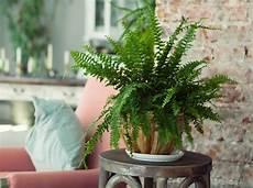 10 zimmerpflanzen die wenig licht brauchen pflanzen